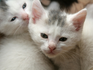 Puppy and Kitten Care - Animal Medical Center